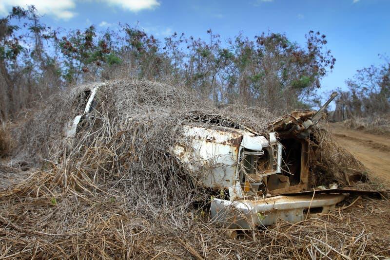 汽车森林与 库存照片