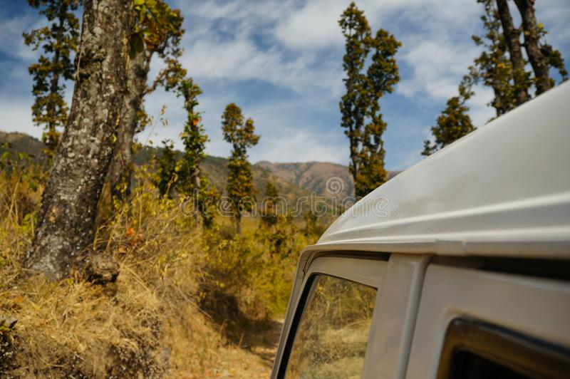 汽车的屋顶射击了反对巨大的树在Dehra Dun印度 免版税图库摄影