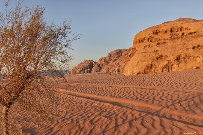 汽车轨道在沙漠 库存图片