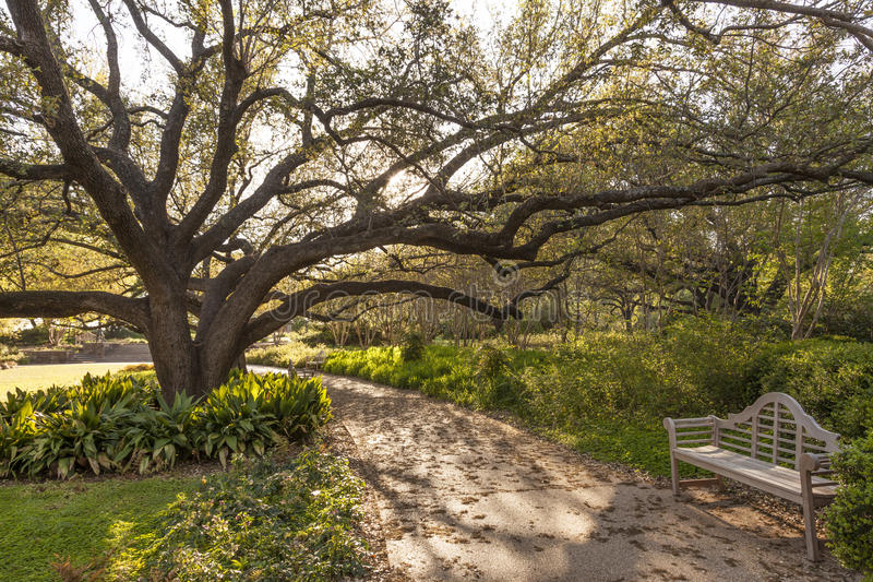 沃思堡, TX,美国城市公园  库存图片