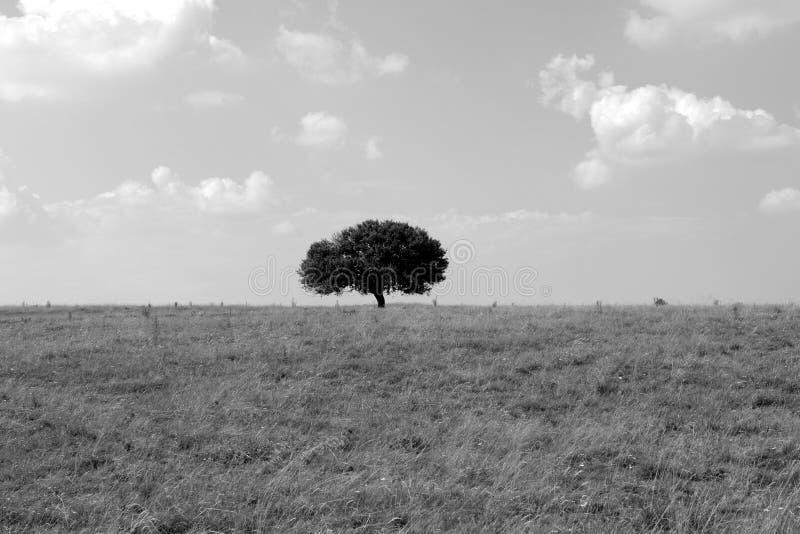 沈默结构树 库存图片