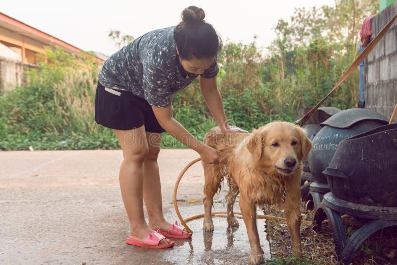 沐浴的妇女放松室外狗的金毛猎犬 库存图片