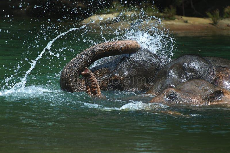 沐浴大象 库存照片