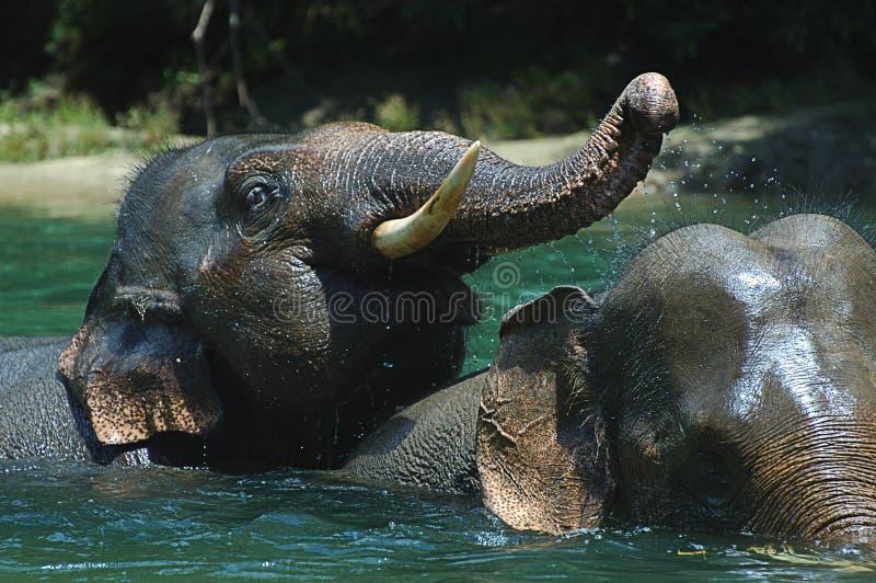 沐浴大象 免版税库存照片