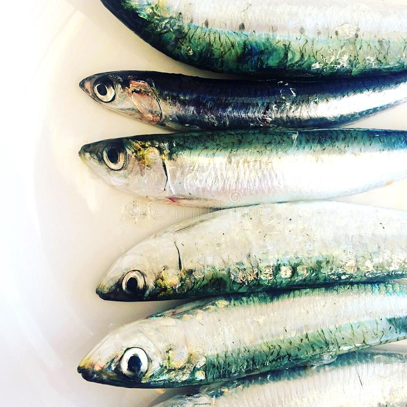 沙丁鱼-一条小,油腻的鱼,有Ω3脂肪酸的营养富有 免版税库存照片