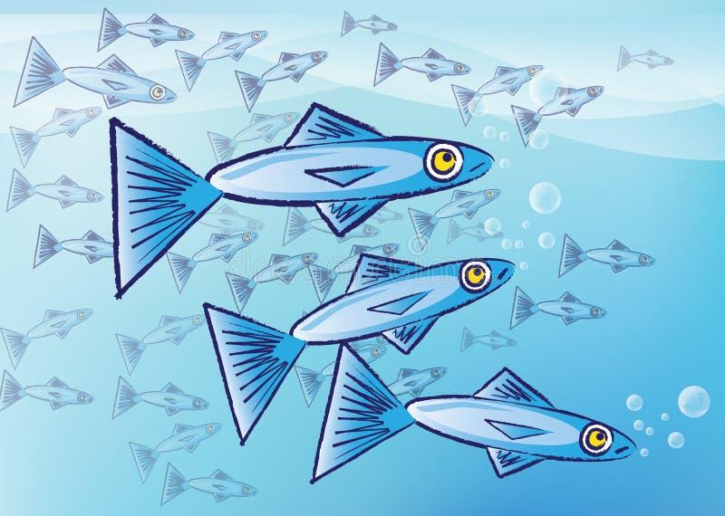 沙丁鱼 库存例证