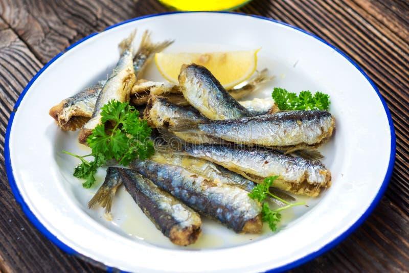 沙丁鱼 免版税图库摄影