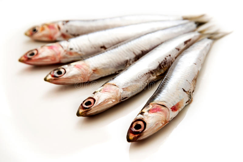 沙丁鱼 免版税库存照片