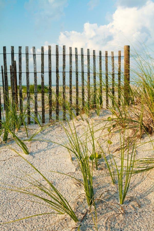沙丘和沿范围的海运草。 免版税库存图片