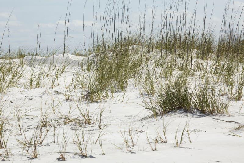 沙丘和海滩草在堡垒德索托,佛罗里达 免版税图库摄影