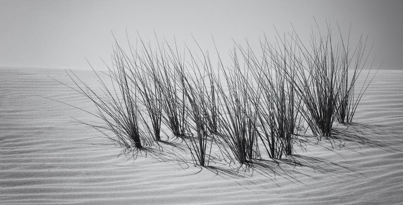沙丘和草风景与风样式艺术性的conv 免版税库存照片