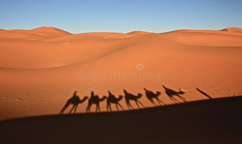 沙丘在撒哈拉大沙漠在Merzouga摩洛哥 免版税库存照片
