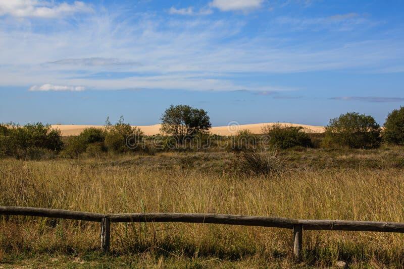沙丘在领域的背景中 免版税库存图片