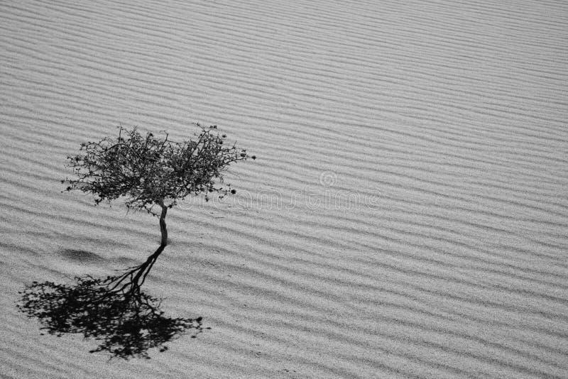 沙丘尤里卡 库存图片