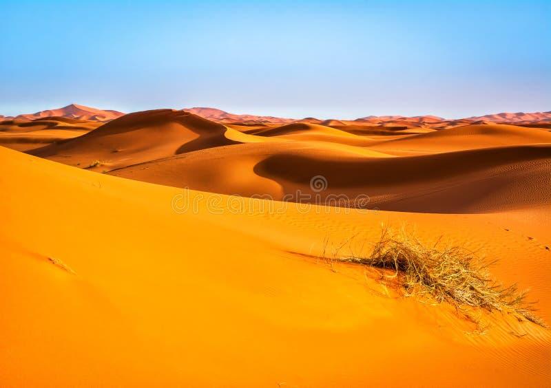 沙丘惊人的看法在撒哈拉大沙漠 地点:Sahar 免版税库存图片