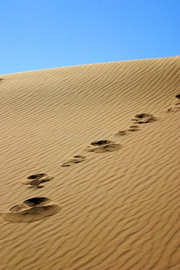沙丘步骤 免版税库存图片