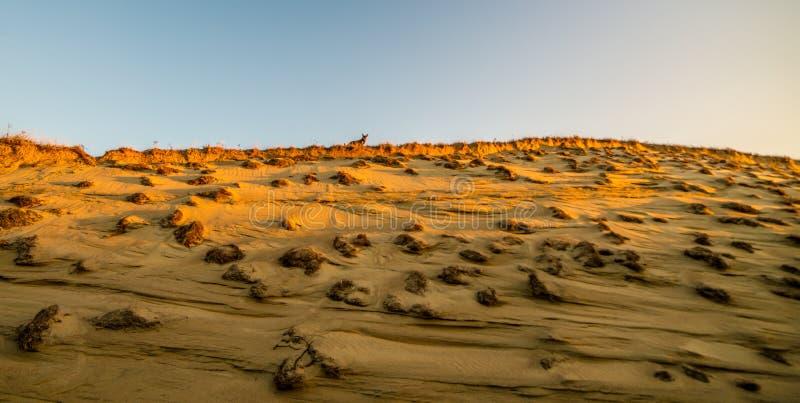沙丘沙子和植物形成 免版税库存照片