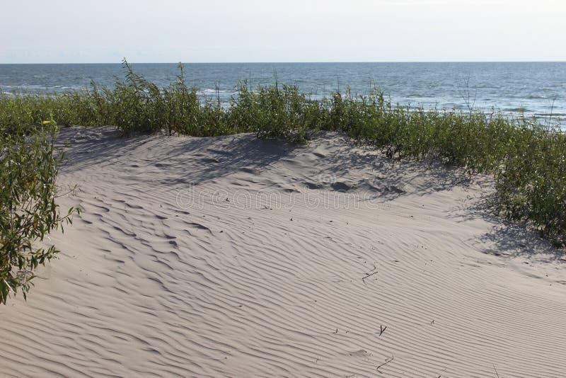 沙丘海滩草水平海滨的背景 免版税库存照片