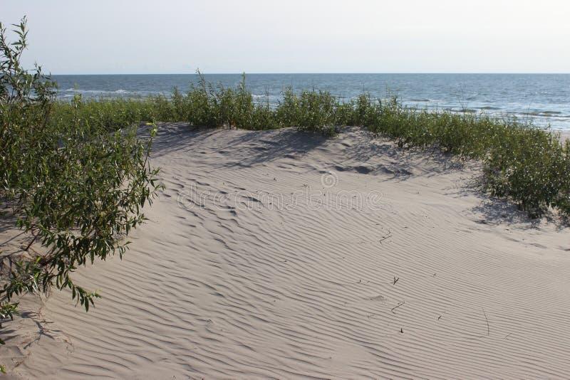 沙丘海滩草水平海滨的背景 图库摄影