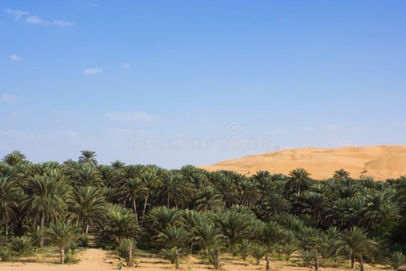 沙丘绿洲 库存照片