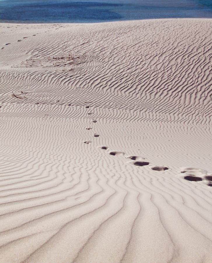 沙丘脚印沙子 免版税库存照片
