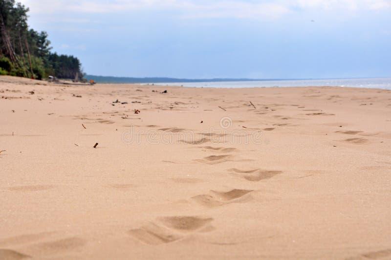 沙丘,绍尔克拉斯蒂,波罗的海,拉脱维亚 免版税图库摄影