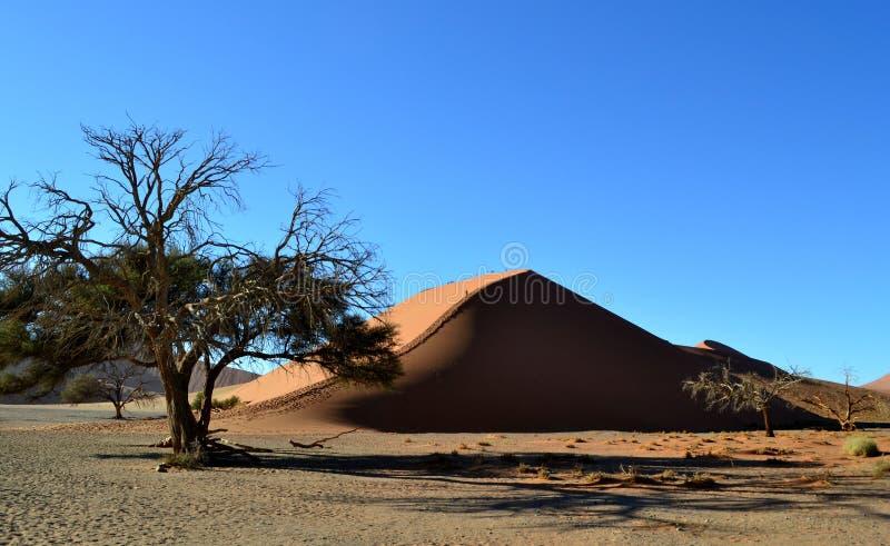 沙丘45,纳米比亚 库存图片