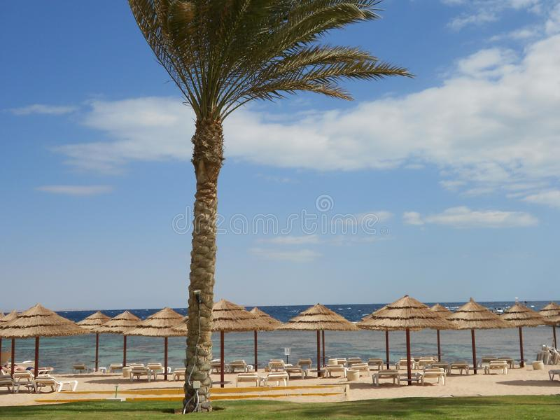 沙姆沙伊赫海滩在埃及 免版税库存图片