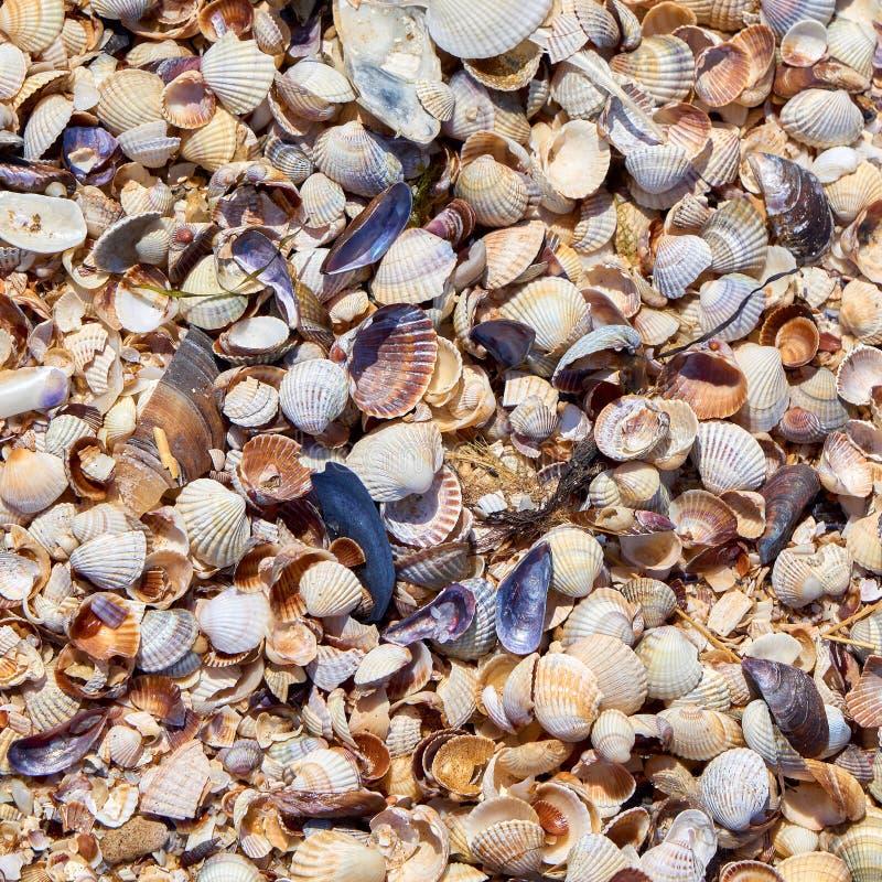 沙子、美好的石头和被击碎的壳许多不同的微粒  库存照片