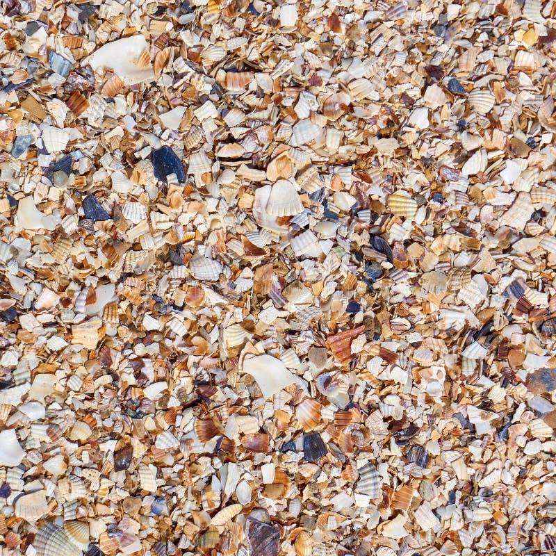 沙子、美好的石头和被击碎的壳许多不同的微粒  库存图片