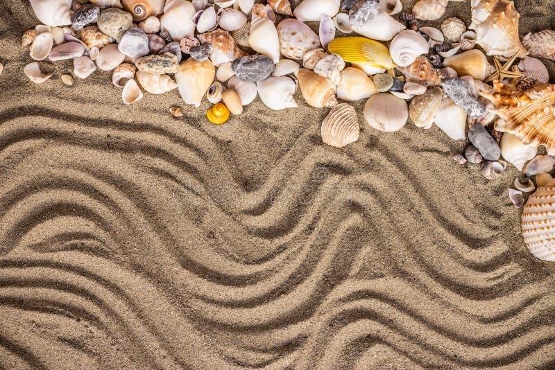 沙子和壳 库存照片