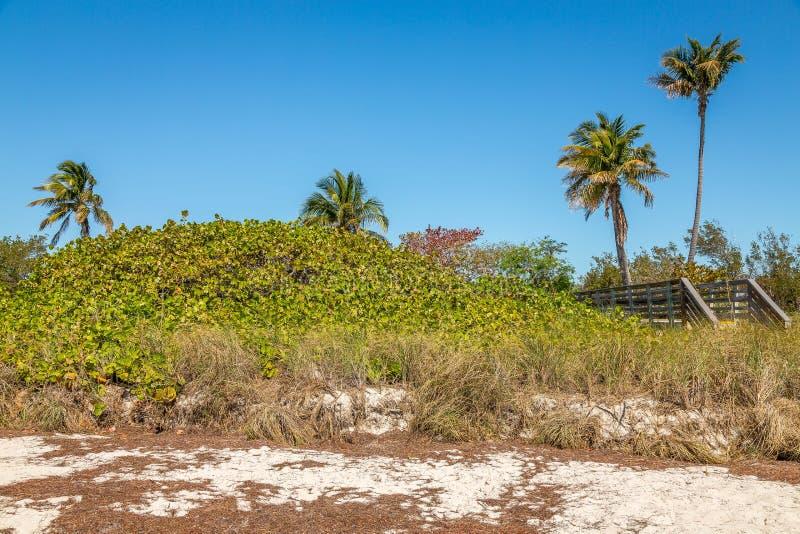 沙子和棕榈树 免版税库存图片