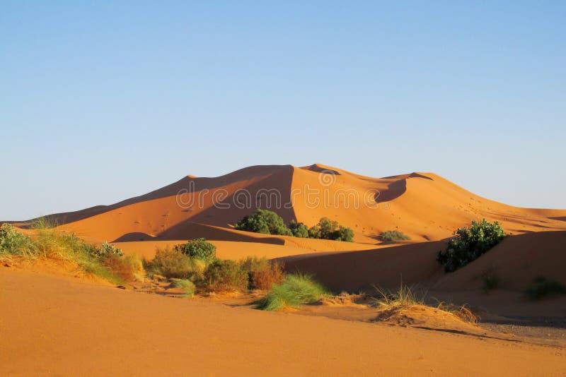 沙子沙漠沙丘在日落的撒哈拉大沙漠 免版税库存照片