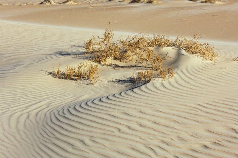 沙子纹理在有植物的沙漠 免版税图库摄影