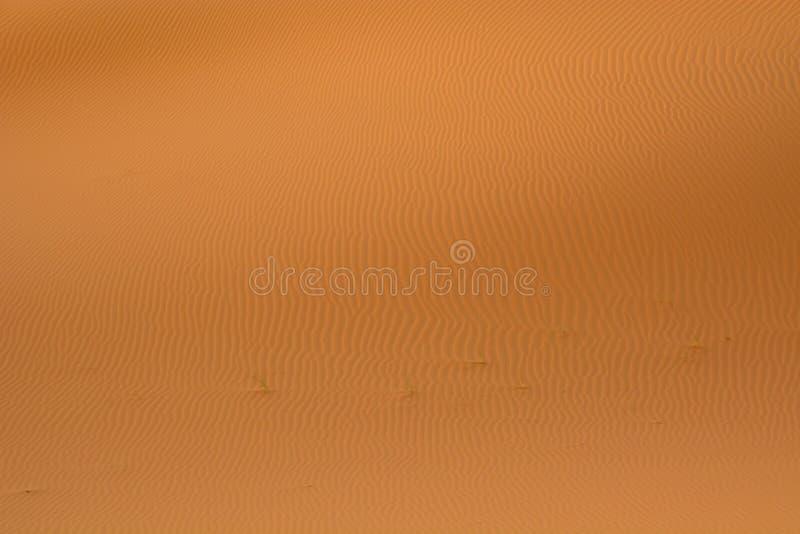 沙子线在撒哈拉大沙漠 免版税库存图片