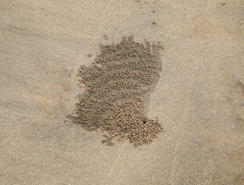 沙子螃蟹巢 图库摄影