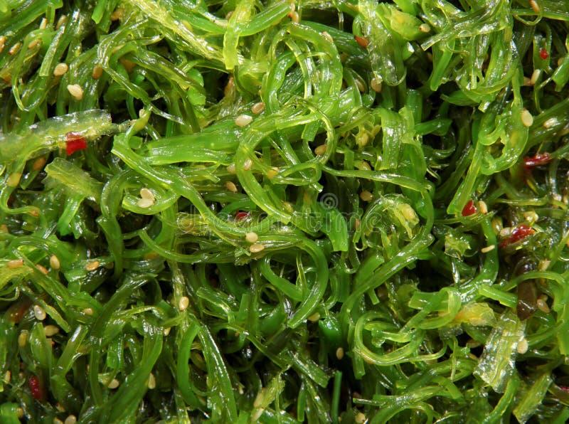 沙拉海草 库存图片