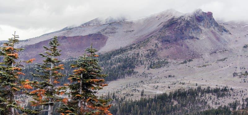 沙斯塔山和杉树从灰色小山落后,锡斯基尤县,加利福尼亚,美国 图库摄影