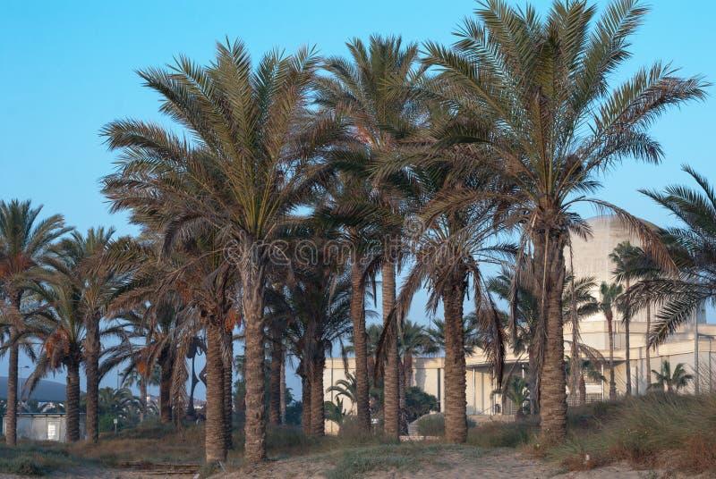 沙滩海岸与棕榈树的 免版税库存照片