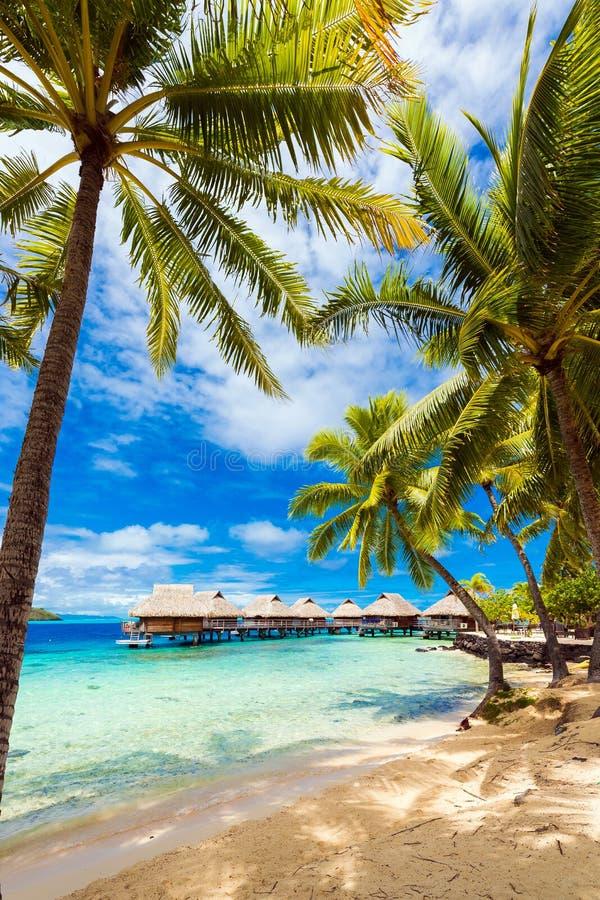 沙滩,博拉博拉岛,法属玻里尼西亚的看法与棕榈树的 ?? 免版税图库摄影