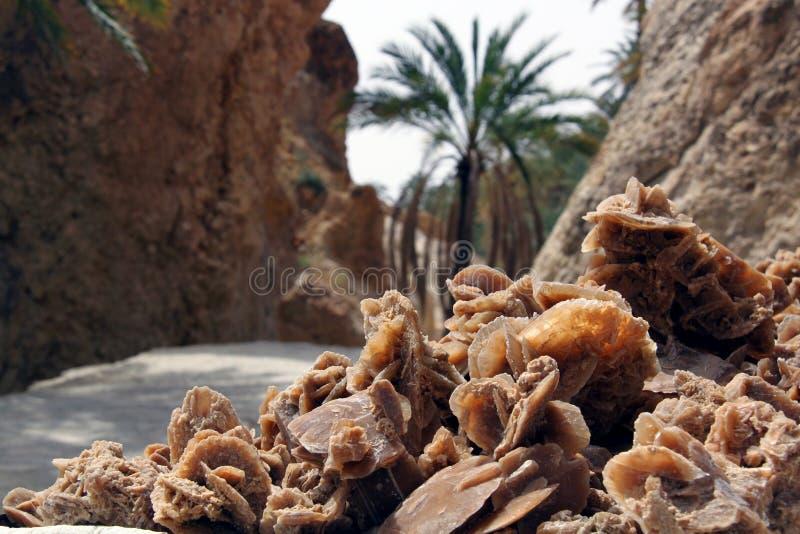 沙漠上升了 库存图片