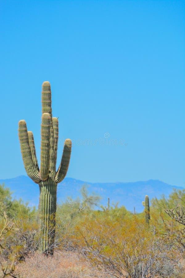 沙漠仙人掌风景在亚利桑那 库存图片