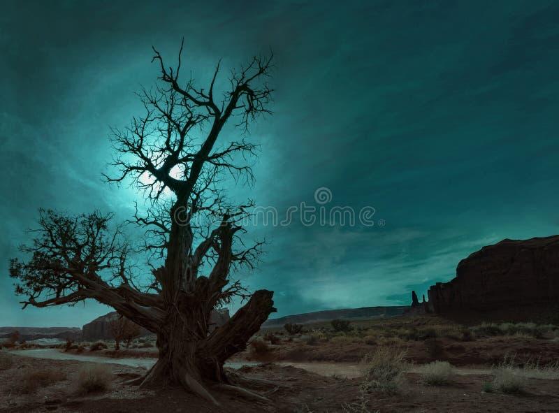 沙漠偏僻的结构树 库存图片