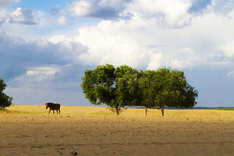 沙漠在内蒙古 库存照片