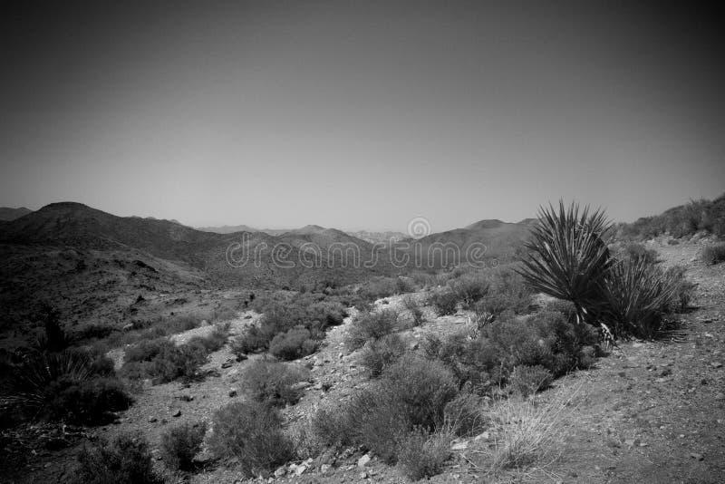 沙漠场面 免版税图库摄影