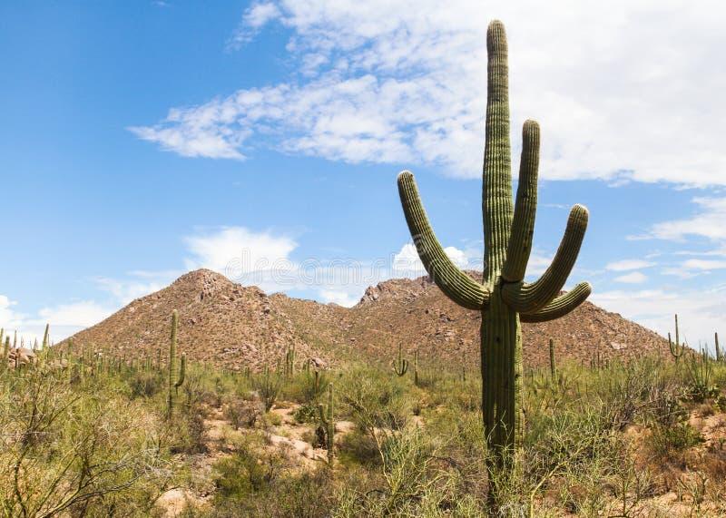 沙漠场面 免版税库存照片