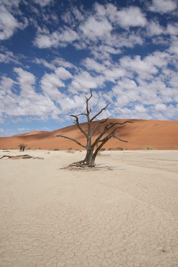 沙漠天空2和树 库存图片