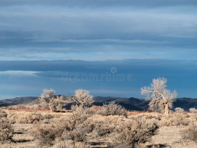 沙漠天空 库存照片
