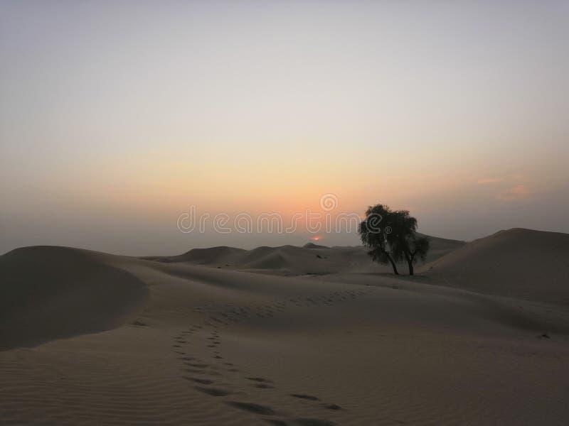 沙漠日落迪拜沙丘 免版税库存图片