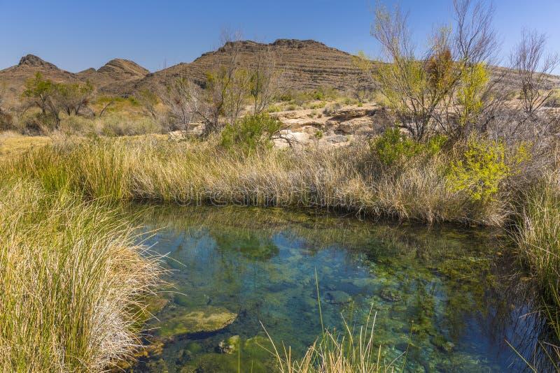 沙漠春天在灰草甸全国野生生物保护区,内华达 库存图片